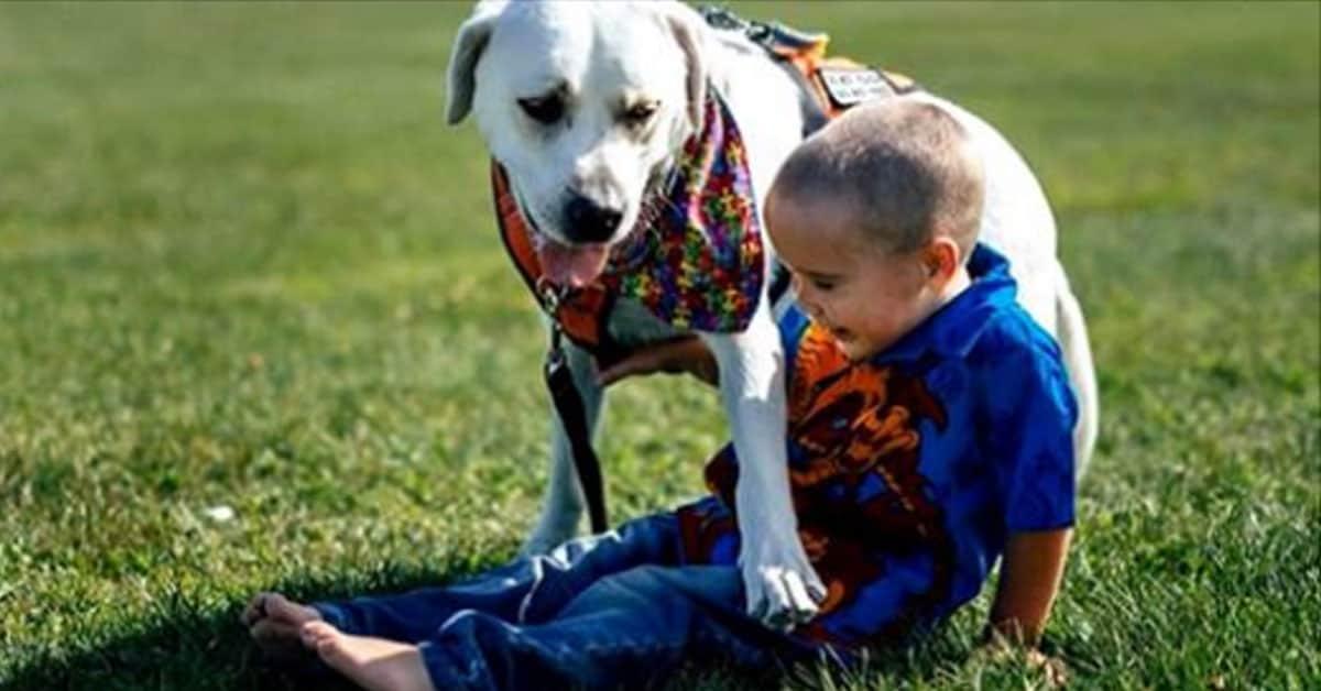 Photo of Çocuklu aileler evcil hayvan almadan önce iyi düşünmeli!