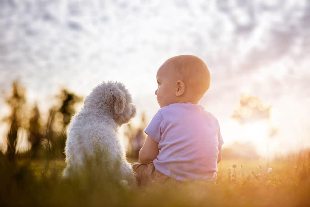 Photo of Çocuklar ve Evcil Hayvanlar