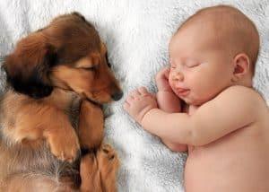 Evcil Hayvanlar ile Çocuklar