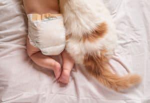 kedi ve bebek
