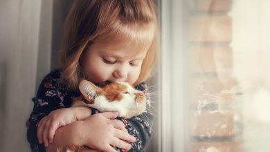 Photo of Çocuğunuza Evcil Hayvanının Öldüğünü Nasıl Açıklarsınız?