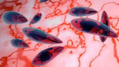 Photo of Toksoplazma Testi Nedir? Ne Zaman Yapılır?
