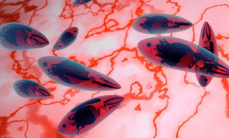 toksoplazma-testi-nedir-ne-zaman-yapilir