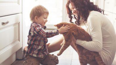 Photo of Evcil Hayvanlar ile Bebekler Aynı Evde Yaşayabilir mi?
